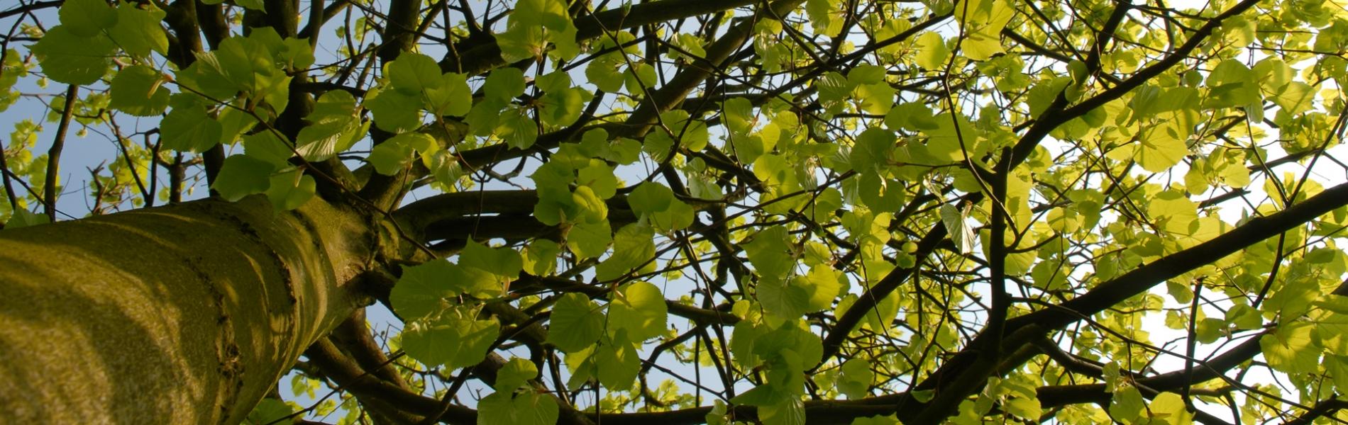 bomen vier seizoenen